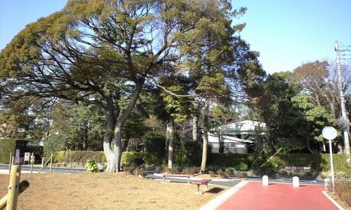 宿の旧道と椎の木