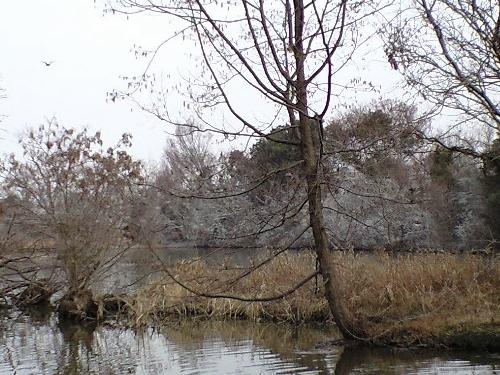 水元公園バードサンクチュアリ