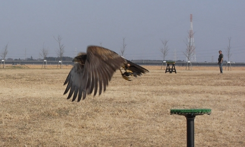 鷹の飛翔画像